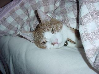 ・・・・起こさないでよ
