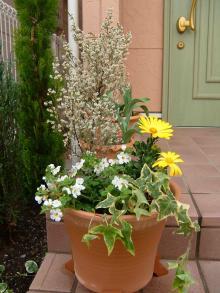 白と黄色の寄せ植え