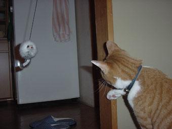 猫パンチ特訓中